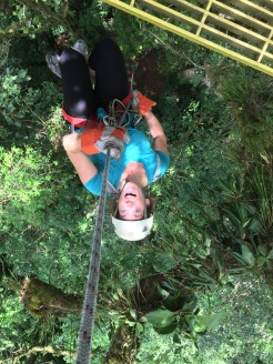 Rapelling down a giant ficus tree