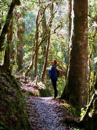 Jenny communing with nature in the cloud forest on a dawn hike